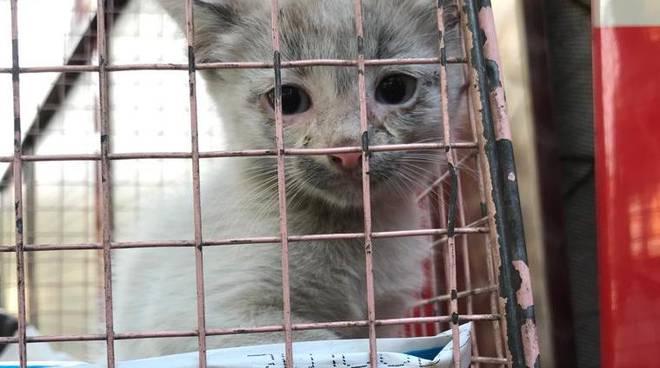 gattino salvato bordighera