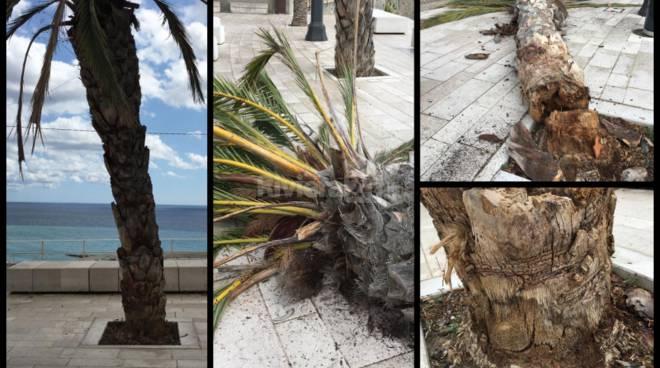 Palma crollata ventimiglia