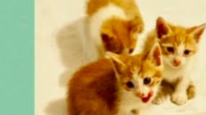 Riviera24- gattini da adottare