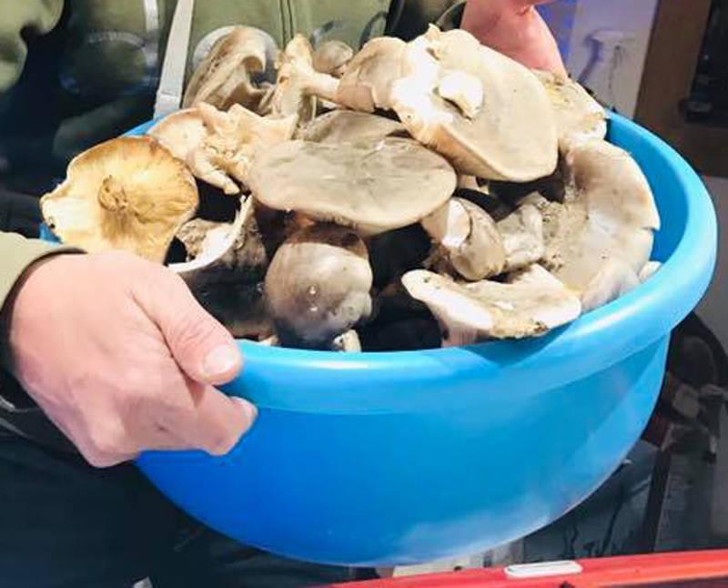 riviera24 - porcini funghi aperlo