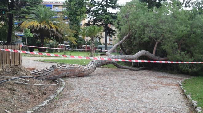 Crollo pino Ventimiglia