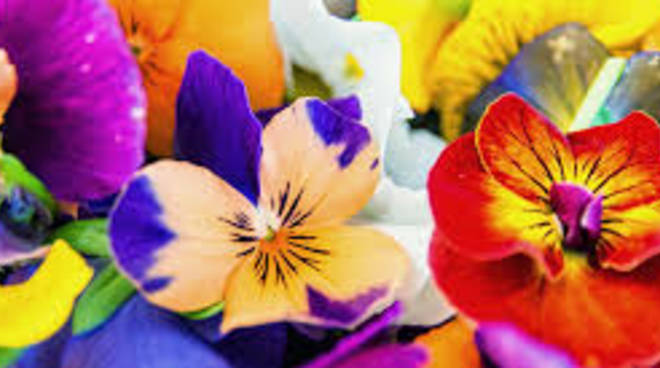fiori cucina