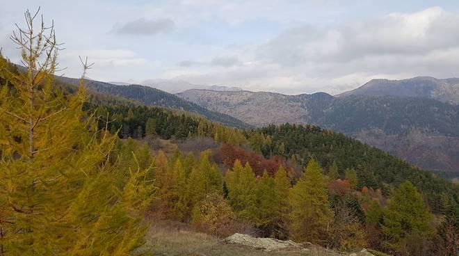 riviera24 - bosco valcona soprana