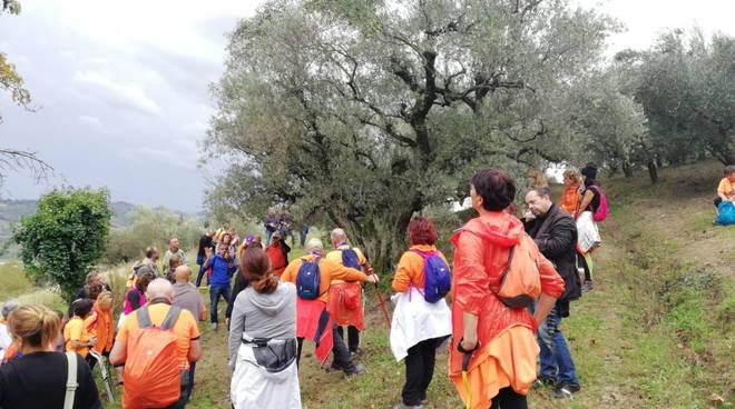 riviera24 - Camminata tra gli olivi