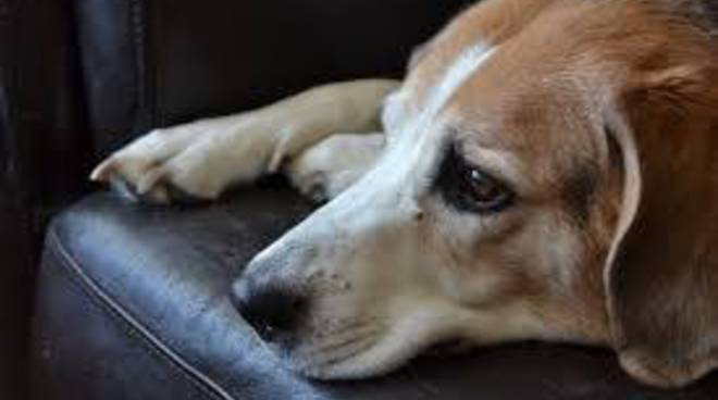 Riviera24- cane maltrattato
