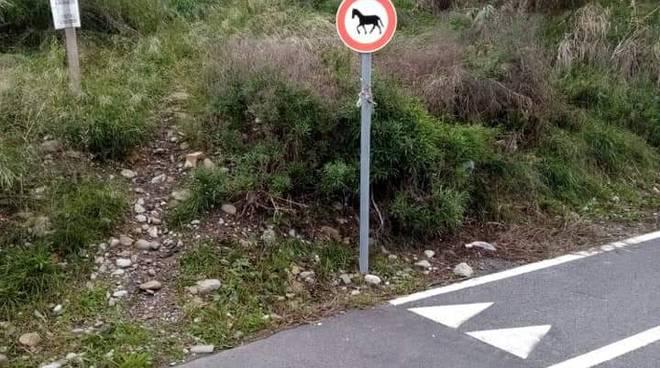 divieto cavalli
