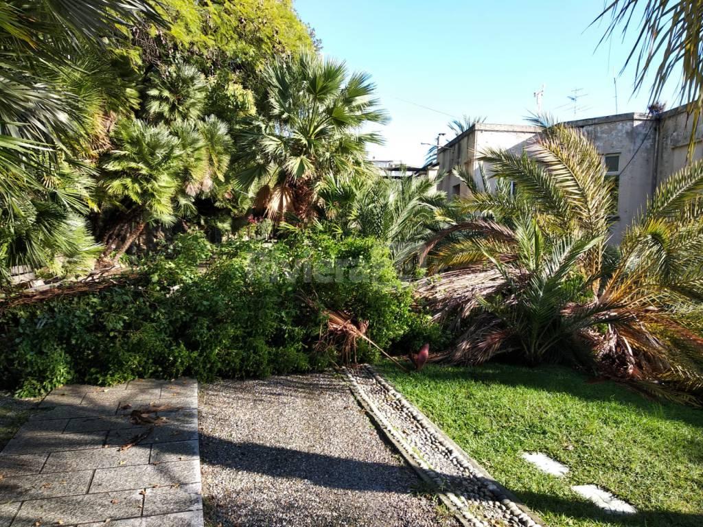 palma caduta a villa ormond