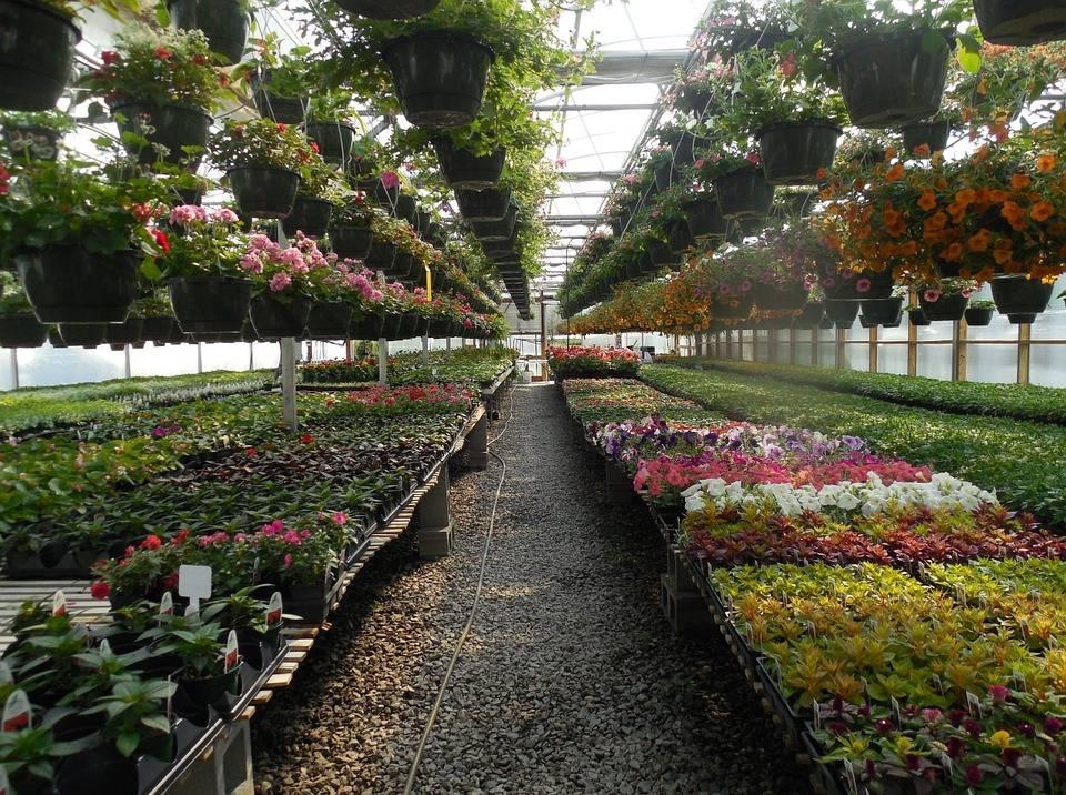 riviera24 - Floricoltura