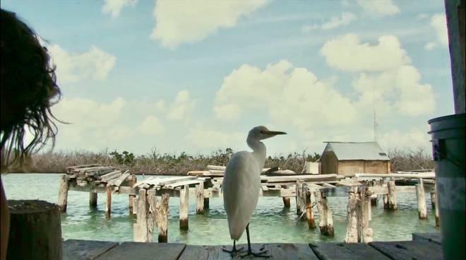 Riviera24- ponente film festival 2019