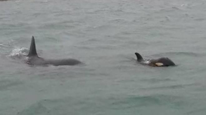 riviera24 - orca marina orche