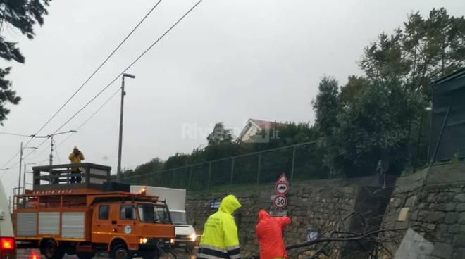 riviera24 - Sanremo, grosso ramo si abbatte sull'Aurelia