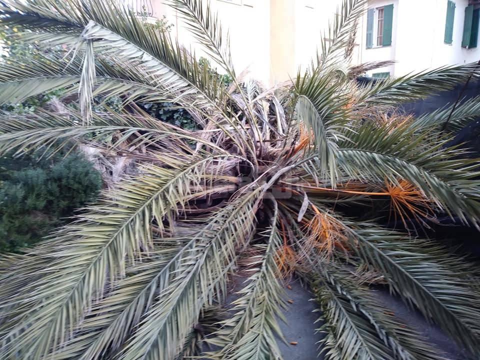palma Bordighera
