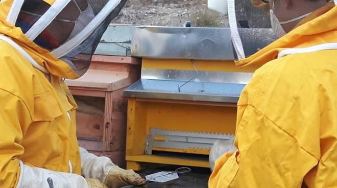 Scuola Forestale di Ormea api