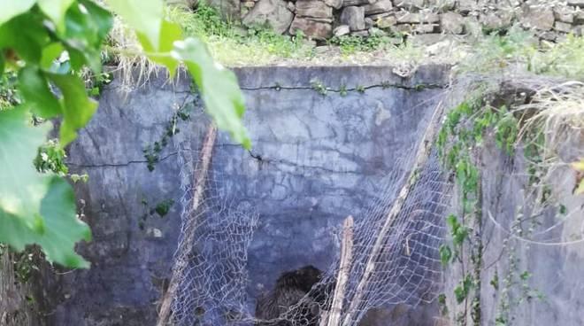 Pietrabruna, cuccioli di cinghiale cadono in una vasca: le immagini del salvataggio