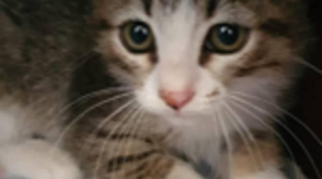 Riviera24- gatto