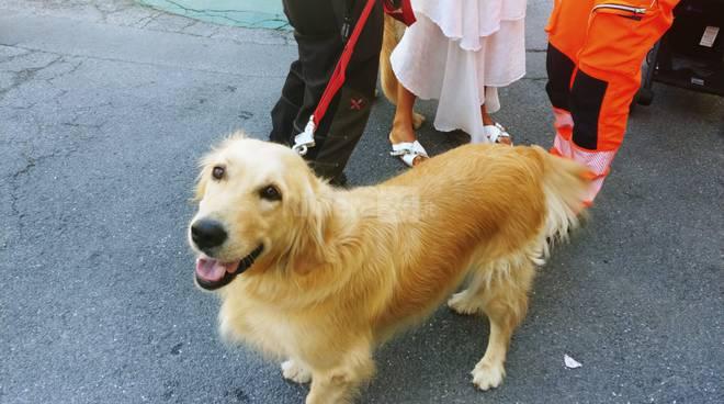 riviera24 - zoe cane vigili del fuoco