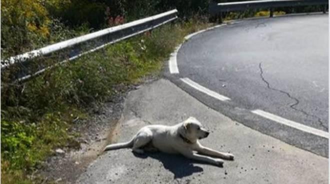 cane ritrovato Costarainera