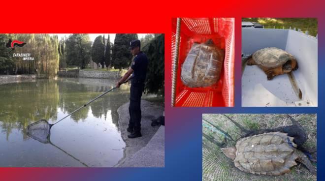 carabinieri forestali tartarughe