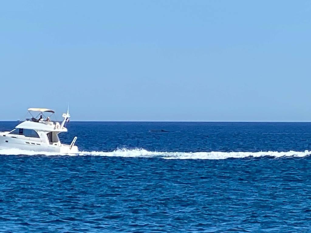 Codamozza San Lorenzo al mare
