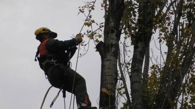 e-distribuzione, taglio alberi
