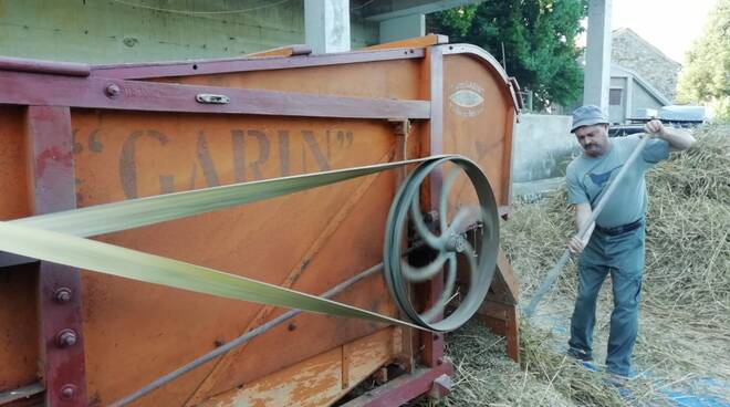 riviera24 - Trebbiatura del Grano a Ciabaudo