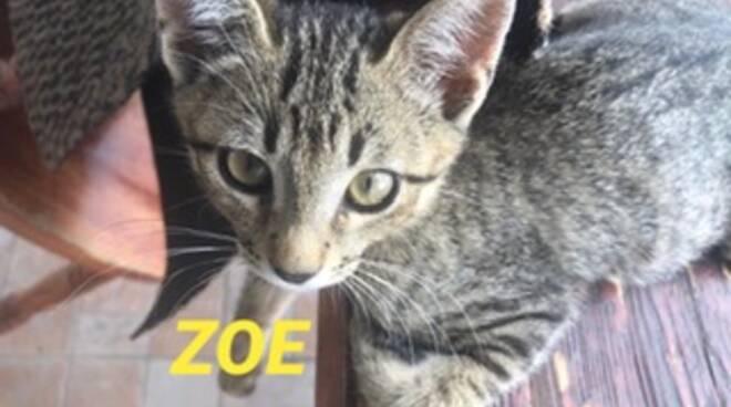 riviera24 - Zoe gatto