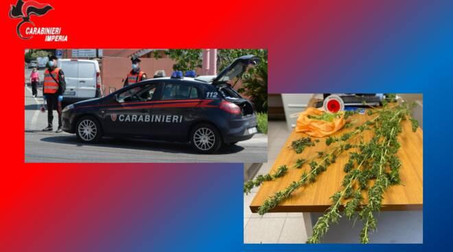 riviera24 - Carabinieri marijuana