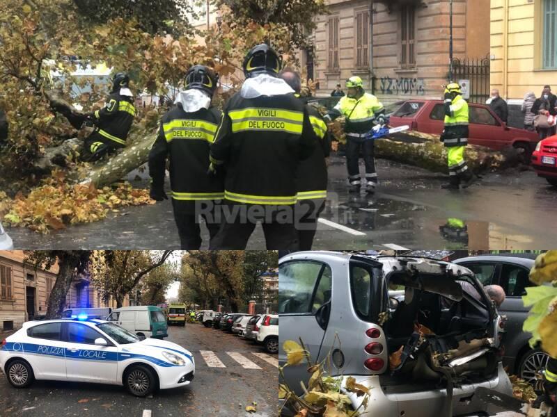 Albero crollato via vittorio veneto Ventimiglia