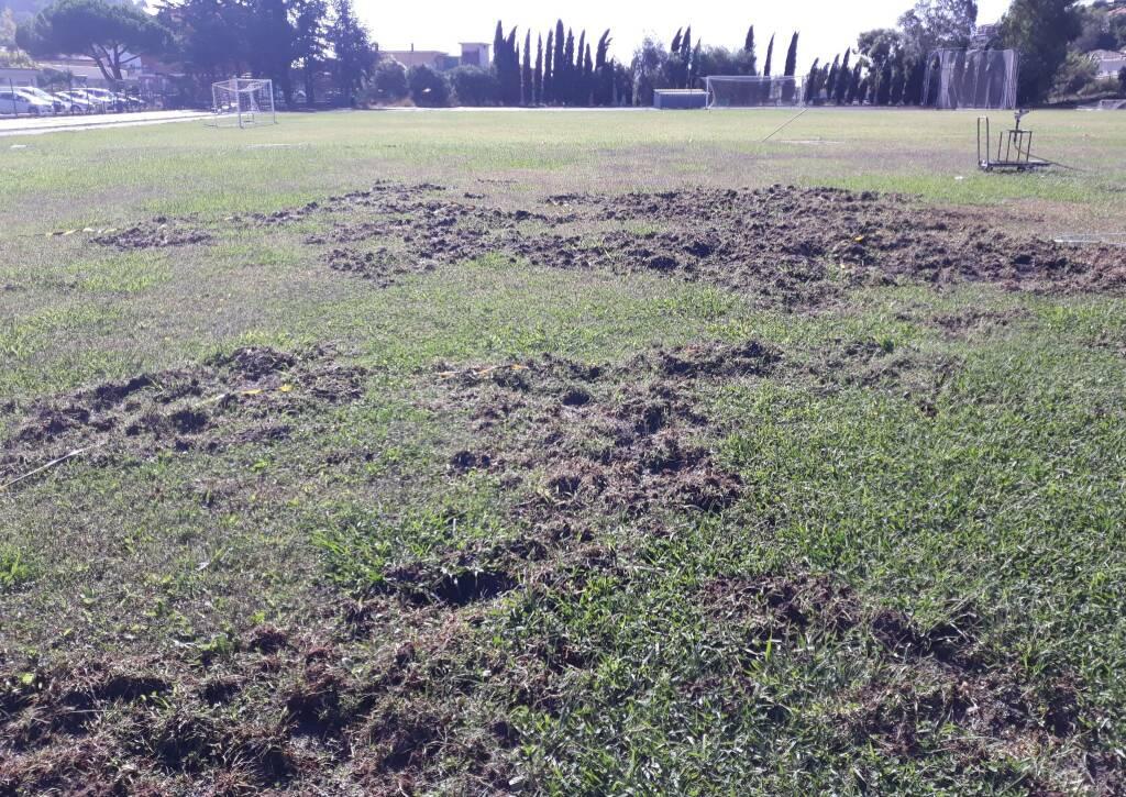 riviera24 - Cinghiali devastano il campo da calcio allo 'Zaccari'
