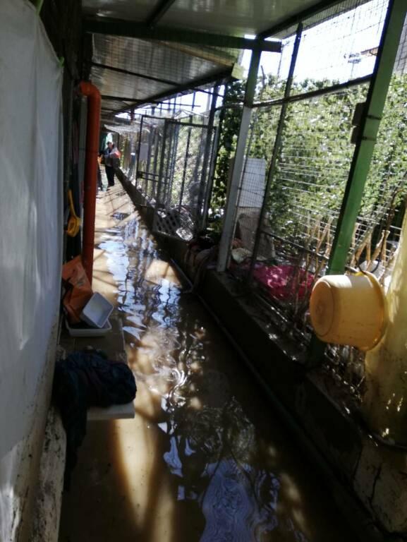 riviera24 - Gattile devastato dall'esondazione a Ventimiglia