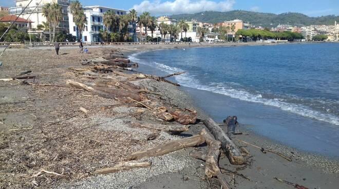 Riviera24- legna spiaggia