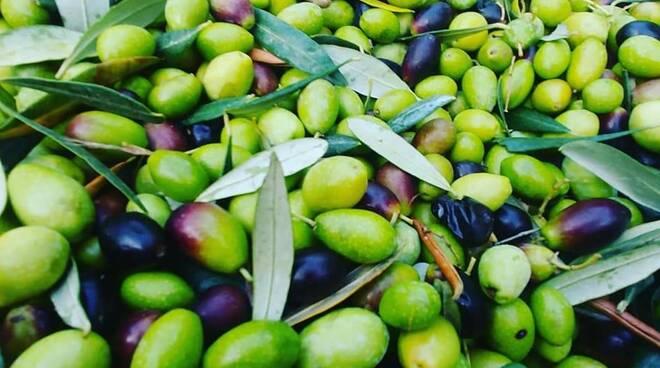 riviera24 - Olive