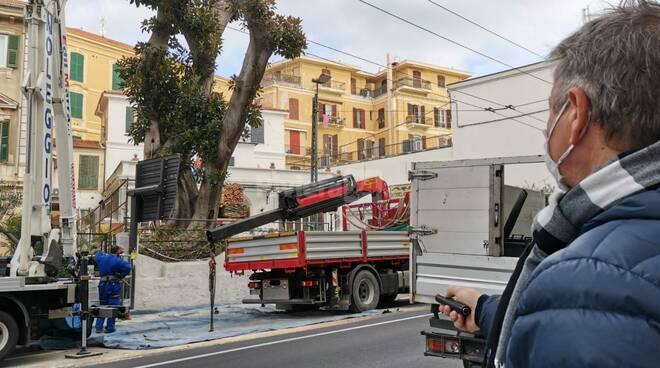 Sanremo ficus rischia di crollare in via Roma. E' il gemello di quello precipitato nel 2018