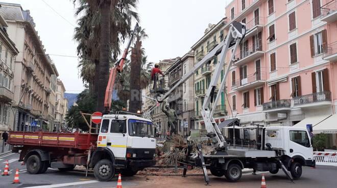 riviera24 - Potatura palme a Sanremo