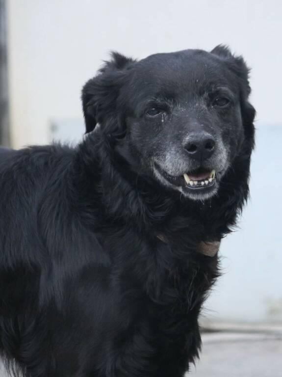 Nero cane