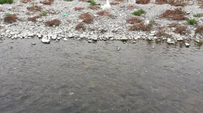 diano marina torrente san pietro liquami