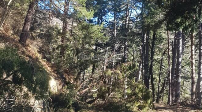 riviera24 - Bajardo, incuria sulla strada provinciale 54