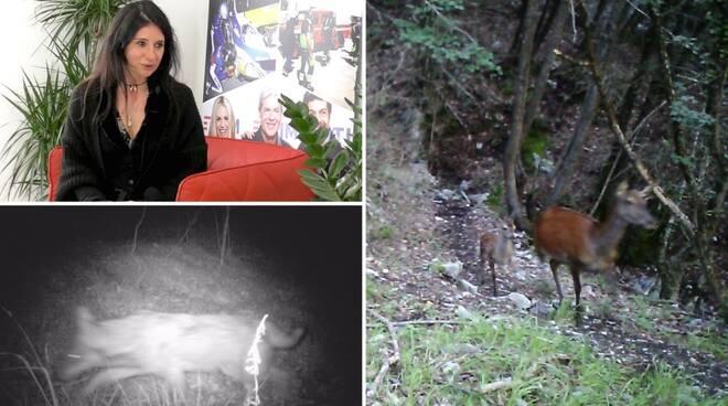 riviera24 - valentina borgna collage fototrappola