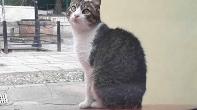 riviera24 - gatta gatto mimì codamozza