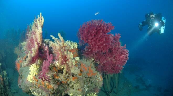 SIC marino di Capo Berta