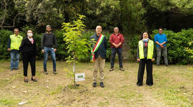 riviera24 - lions pianta alberi