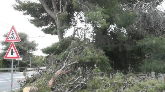 Riviera24- pino aurelia