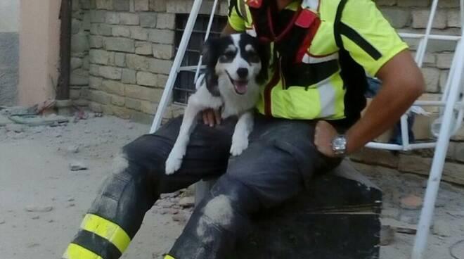 cane canada vigili del fuoco