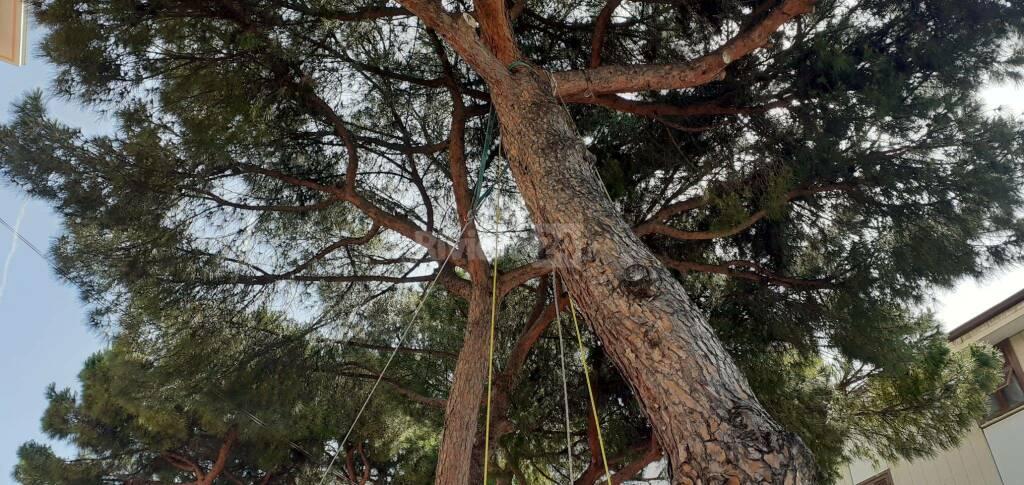 riviera24 - Prove di stabilità sui pini