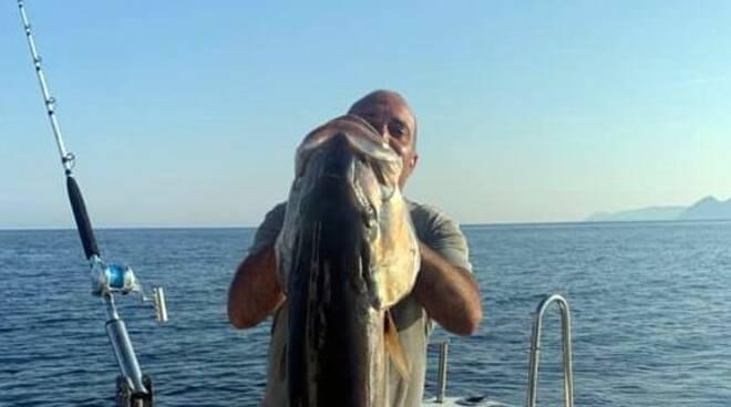 riviera24 - ricciola pesce paolo gismondi