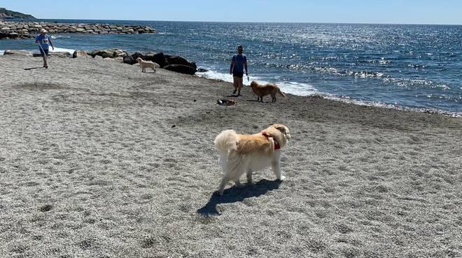 Riviera24- spiaggia cani san bartolomeo