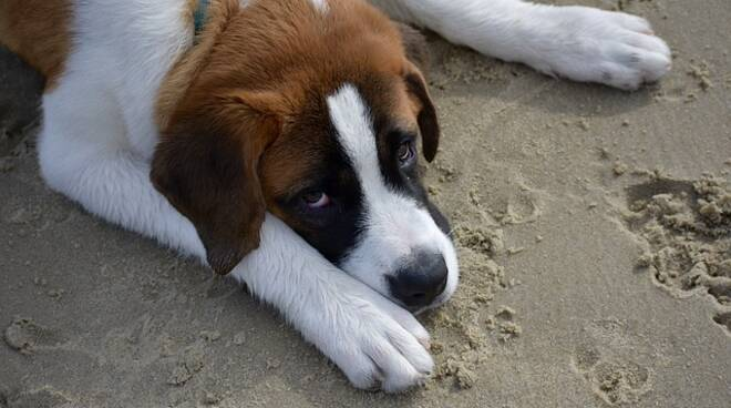 Cane divieto spiaggia