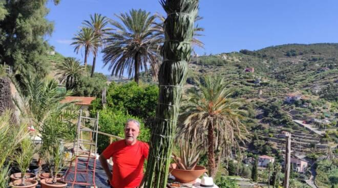 Legatura delle palme