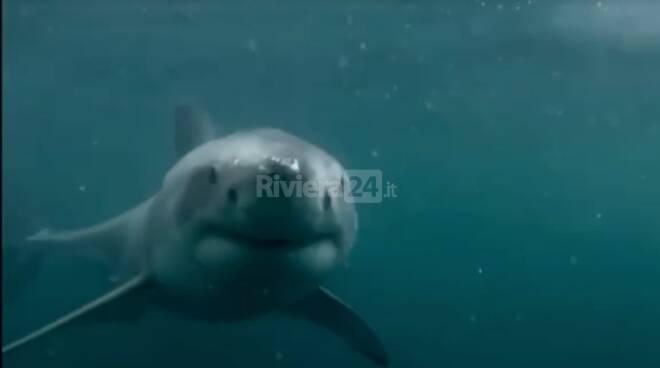 video squalo bordighera