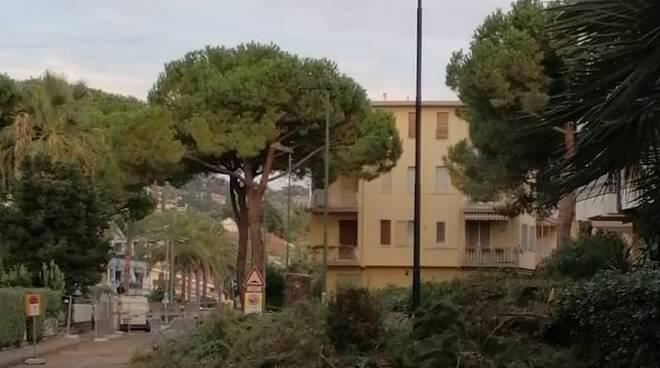Riviera24- pini bordighera